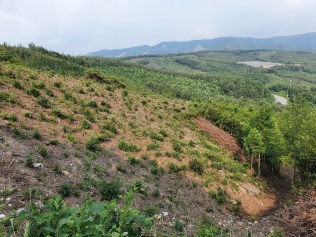 Measuring early growth field performances in plantations