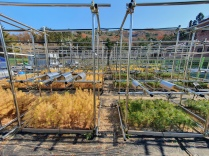 Nursery for extreme climate manipulation experiment in Gwangneung Expriemental Forest (NIFoS)